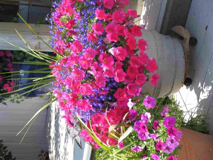 Container Gardening Sun Flowers