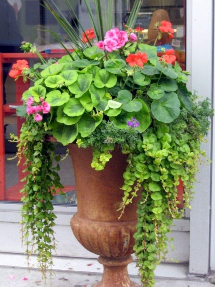 Container Gardens Ideas Design