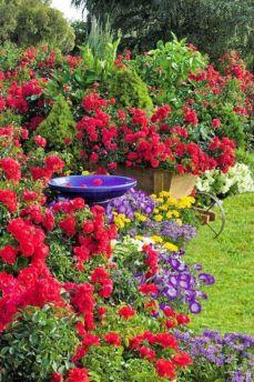 Flower Carpet Rose Cottage Gardens