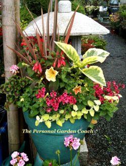 Outdoor Flowers Containers Arrangement