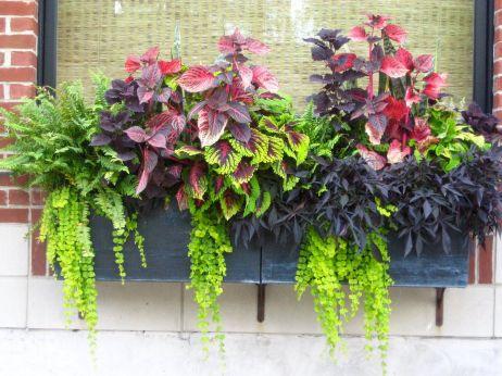 Window Box Flower Ideas