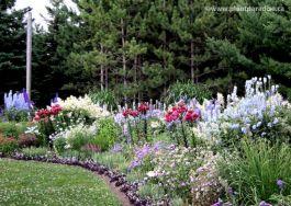 Beautiful Iris Garden Ideas 12