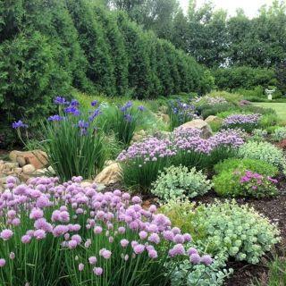 Beautiful Iris Garden Ideas 13