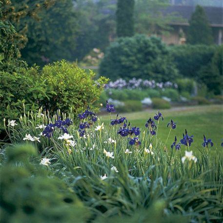 Beautiful Iris Garden Ideas 15