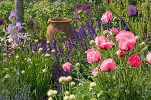 Beautiful Iris Garden Ideas 17