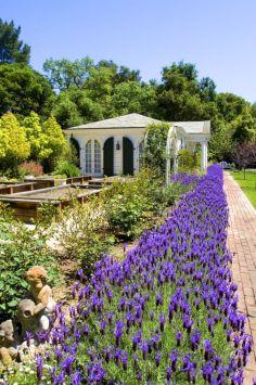 Beautiful Iris Garden Ideas 2