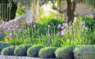 Beautiful Iris Garden Ideas 23