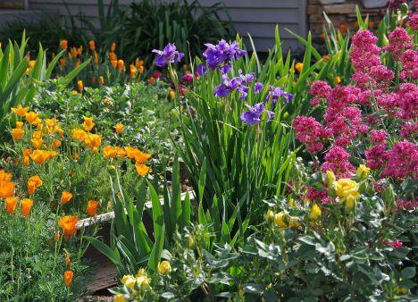 Beautiful Iris Garden Ideas 9