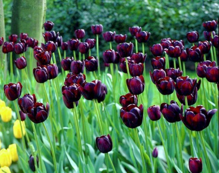 Black Flower Garden Ideas 1