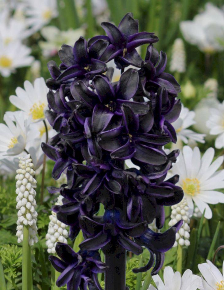 Black Flower Garden Ideas 12