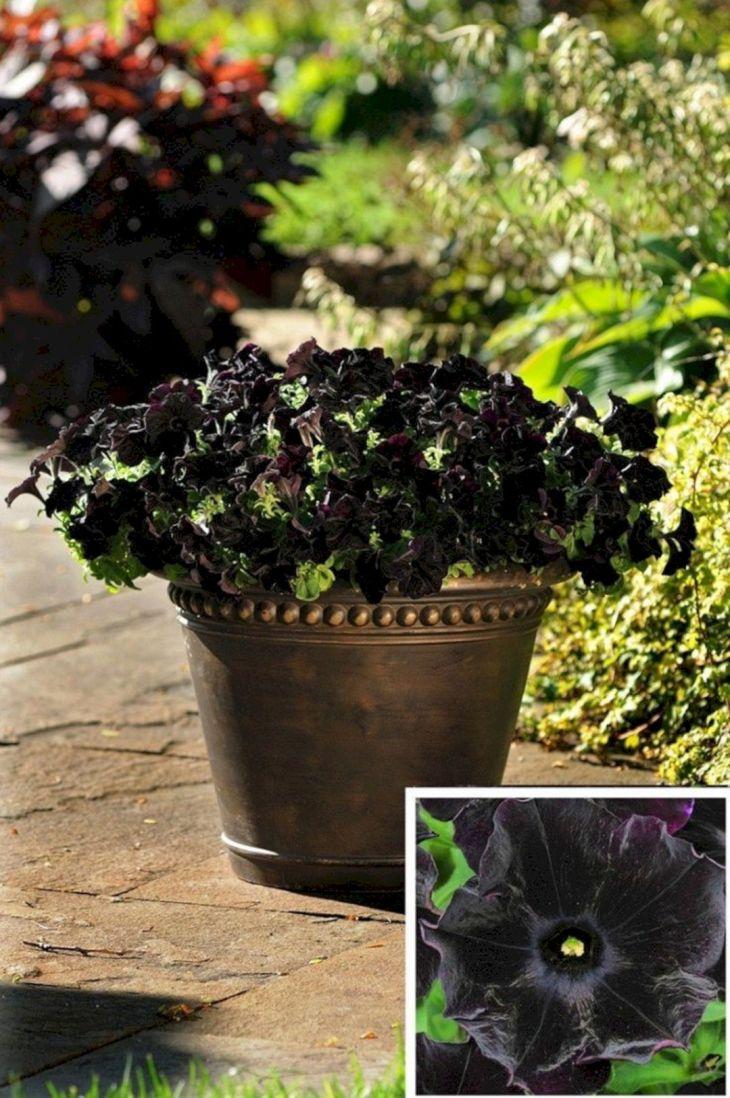 Black Flower Garden Ideas 14