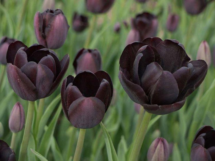 Black Flower Garden Ideas 15