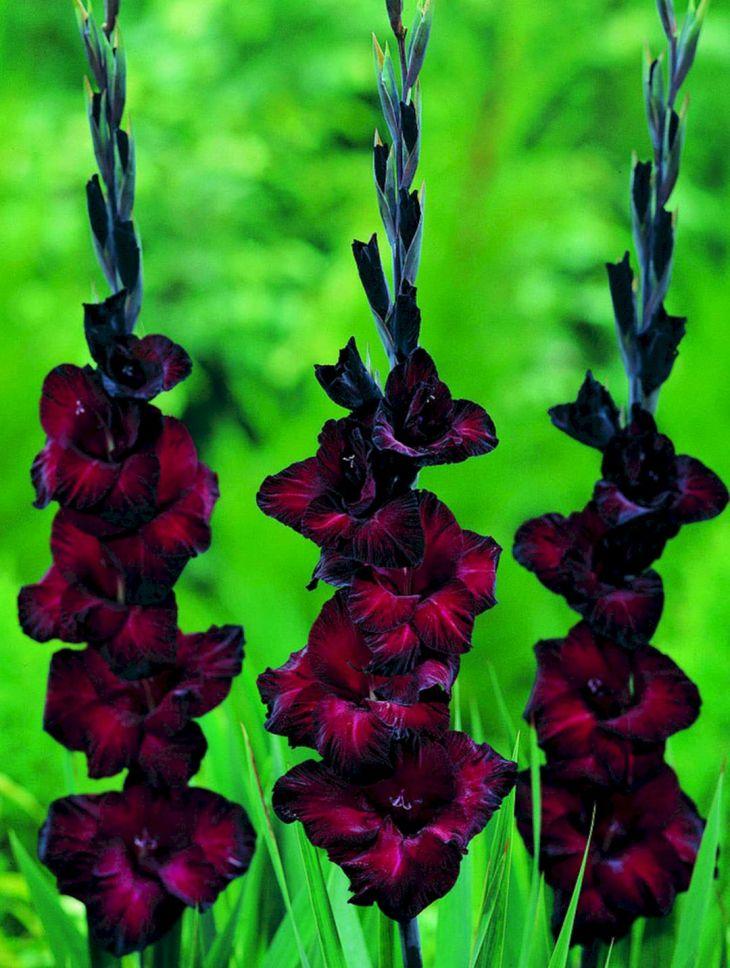 Black Flower Garden Ideas 24