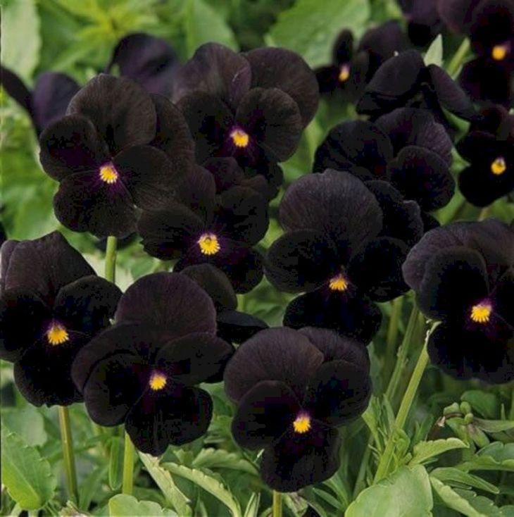 Black Flower Garden Ideas 25