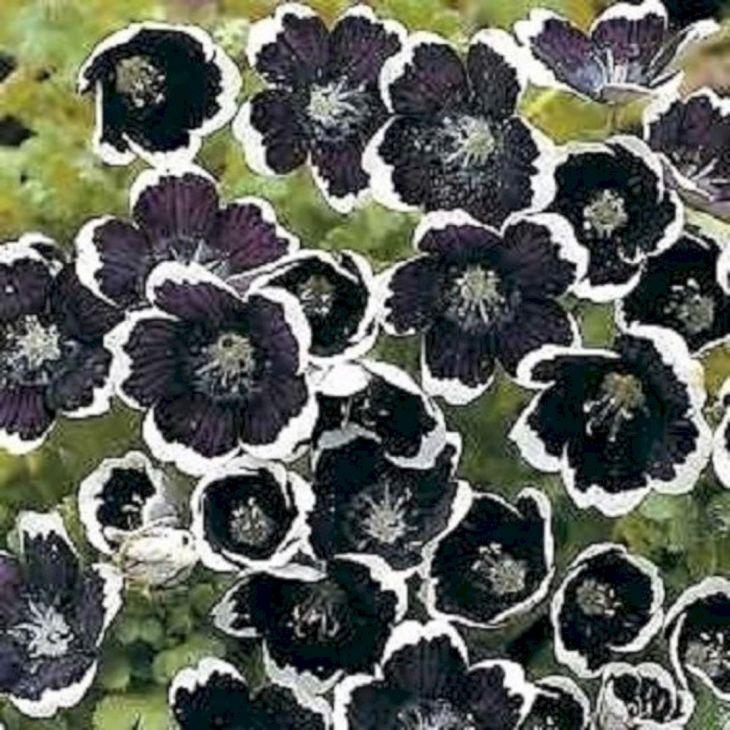 Black Flower Garden Ideas 5