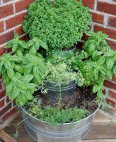 Herb Garden Ideas 9