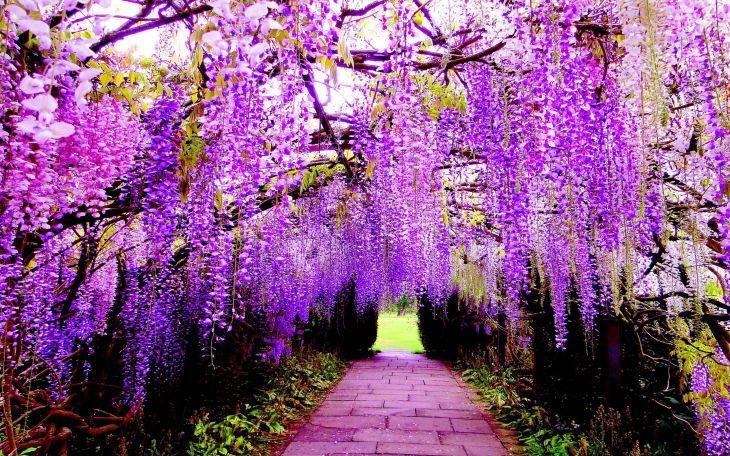 Japanese Flower Gardens Ideas 17