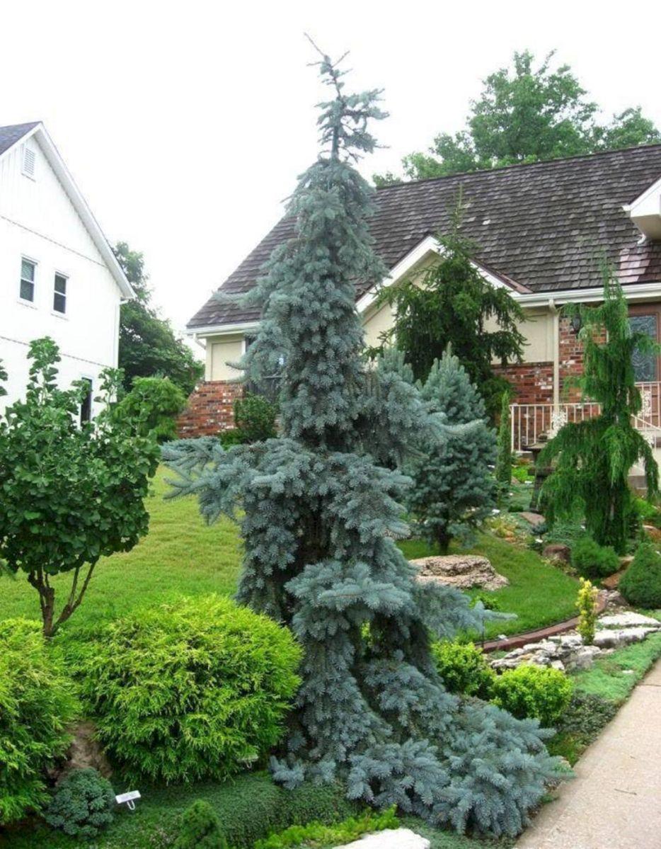 Best 8 Chic Front Yard Garden With Dwarf Pine Trees - DECOREDO