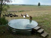 Stock Tank Swimming Pool Design 11