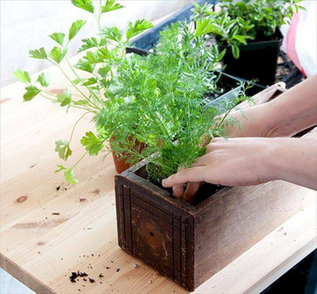 DIY Indoor Herb Garden 16
