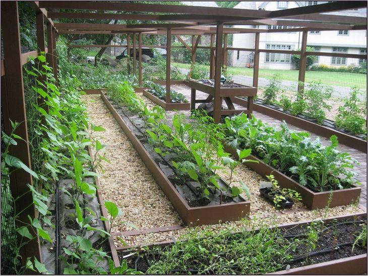 Vegetable Garden Ideas 5