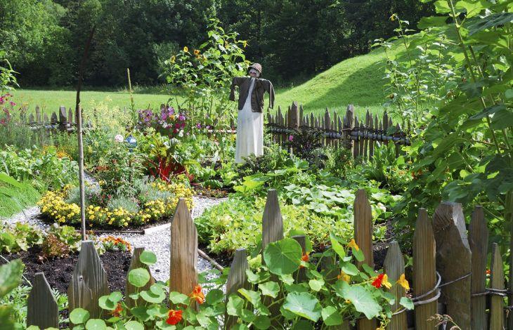 Vegetable Garden Ideas 8
