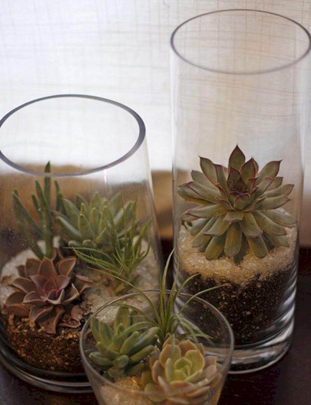 DIY Succulent Glass Planter