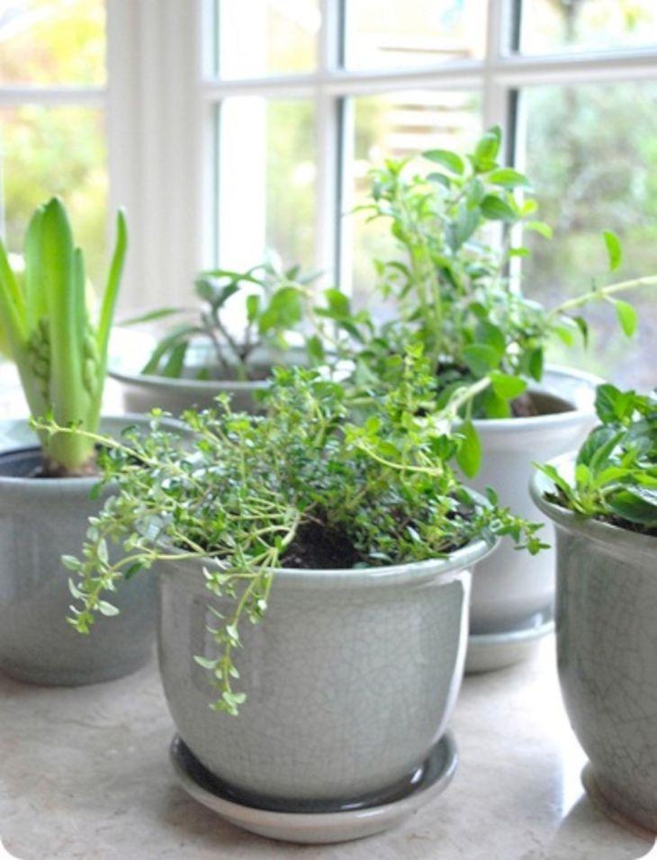 Indoor Herb Garden 120