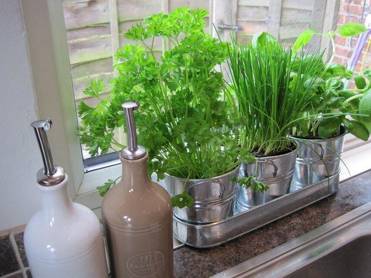 Indoor Herb Garden 20
