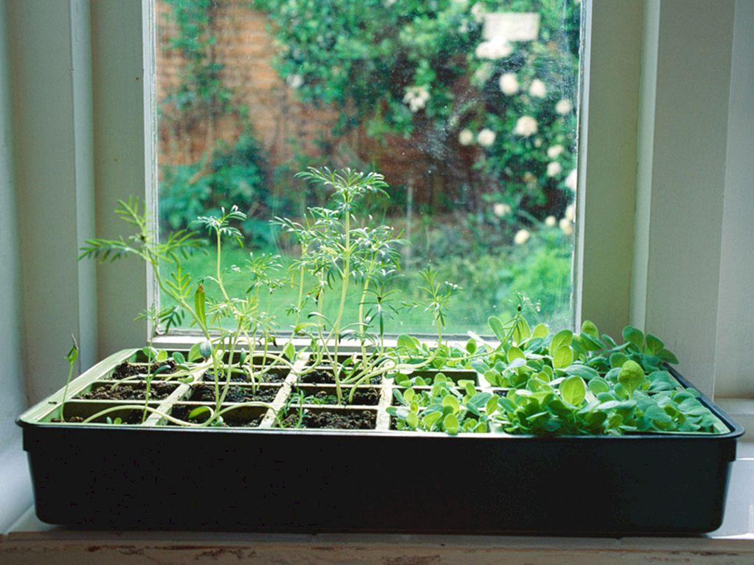 Indoor Herb Garden 300
