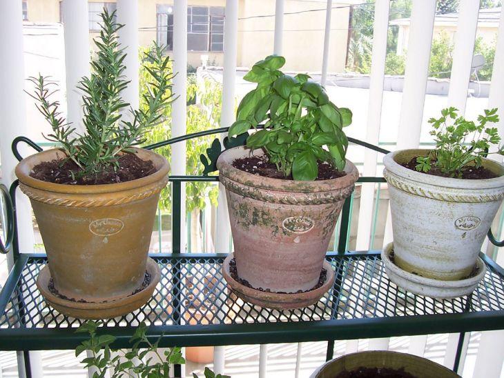 Indoor Herb Garden 60