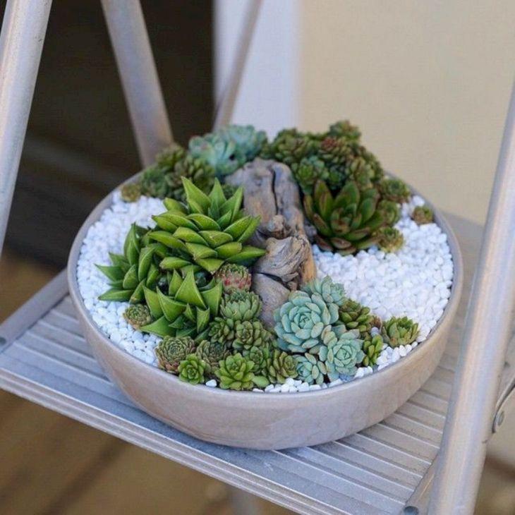 Indoor Succulent Garden 113