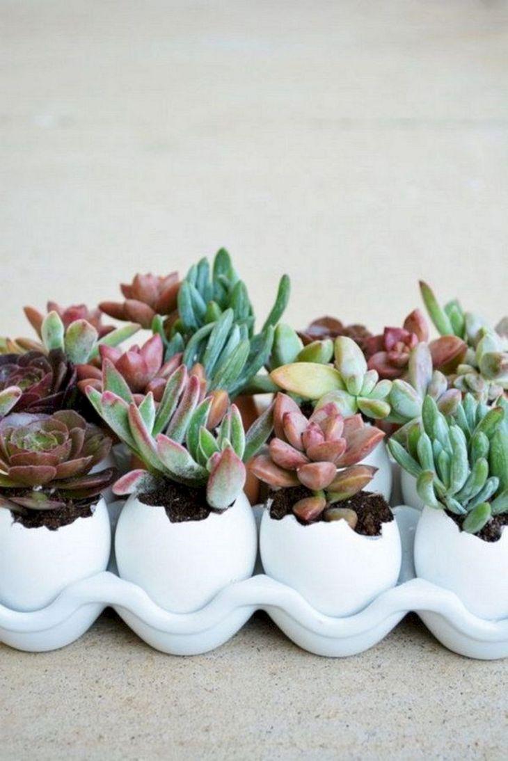 Indoor Succulent Garden 124