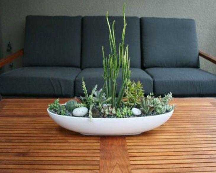 Indoor Succulent Garden 127