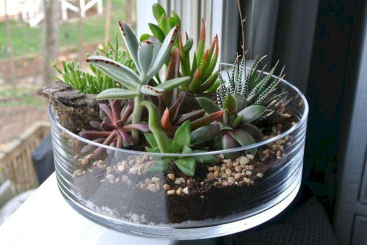 Indoor Succulent Garden 129