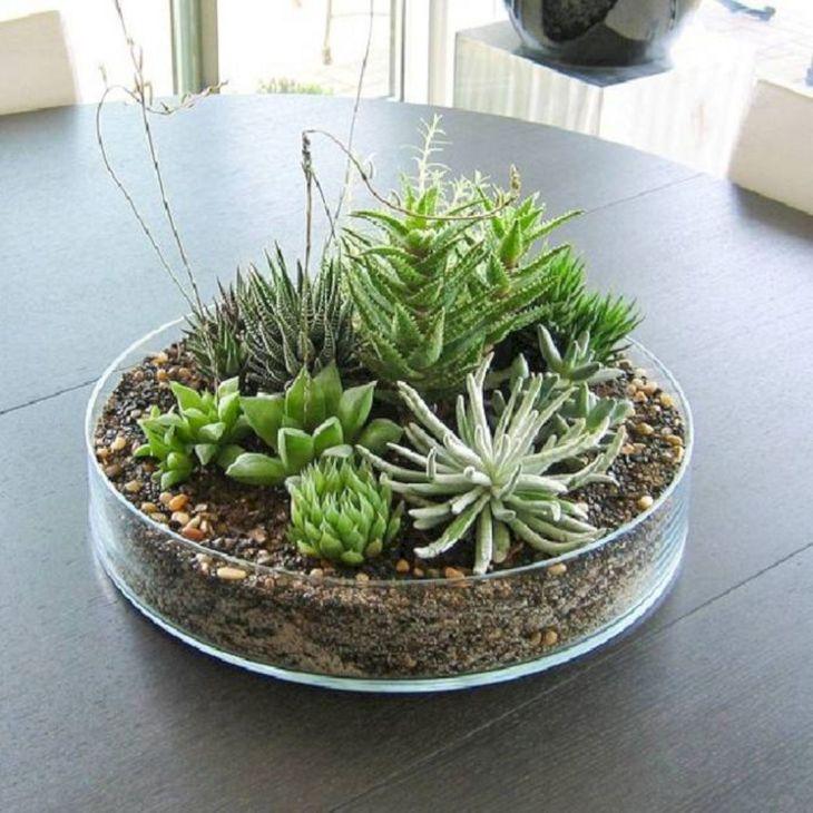 Indoor Succulent Garden 13