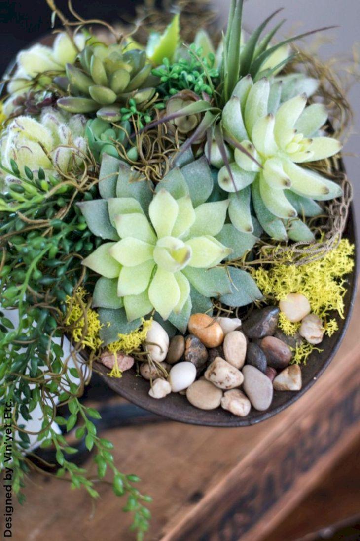Indoor Succulent Garden 18