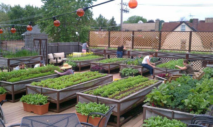 Rooftop Garden Ideas 11