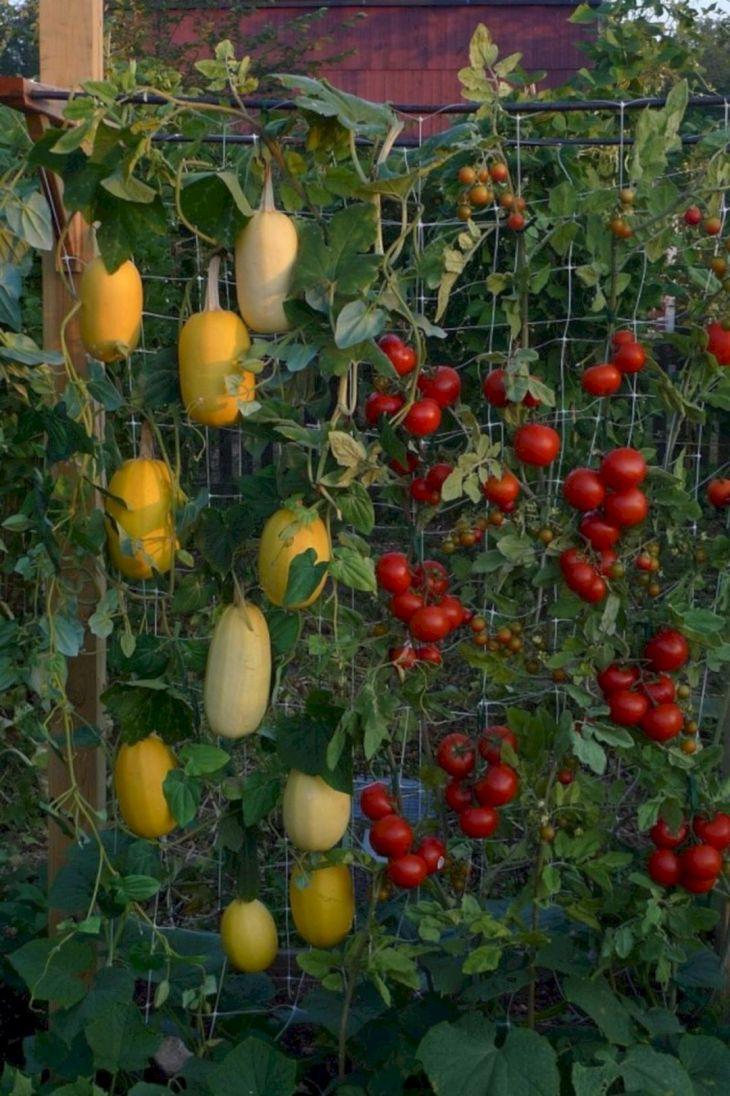 Vertical Gardening Ideas 018