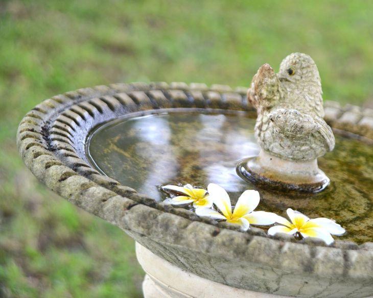 Home Front Garden With Bird Bath 4