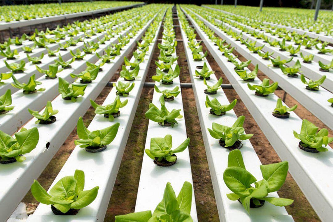 Hydroponic Vegetable Gardens 2