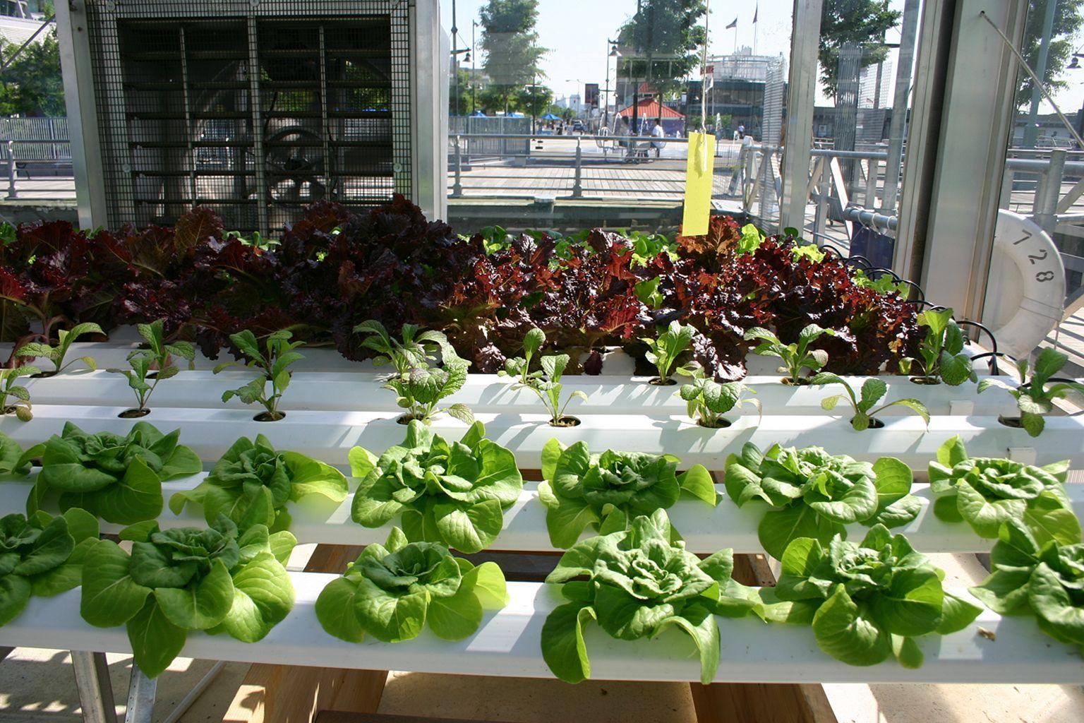 Hydroponic Vegetable Gardens 3
