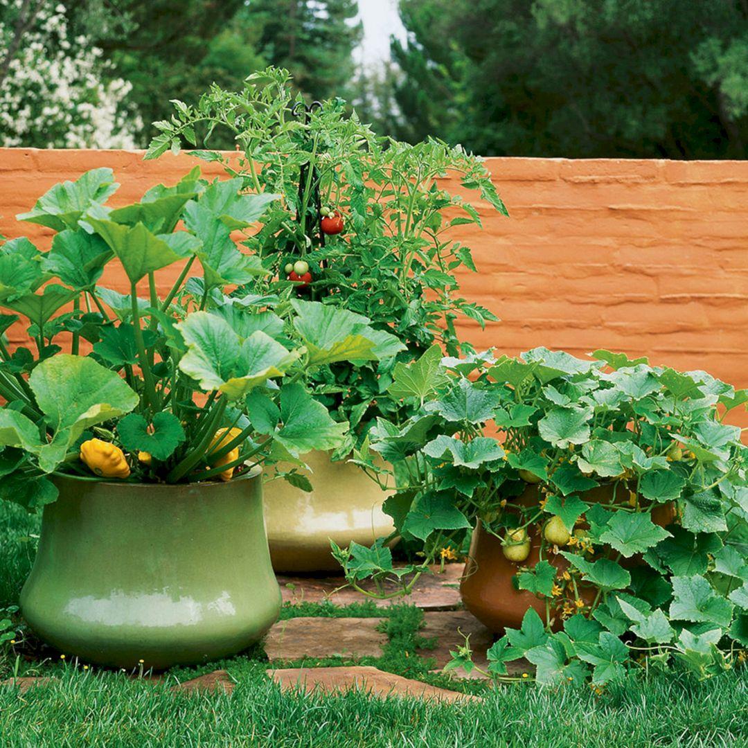 Vegetable Garden in a Large Pot 6