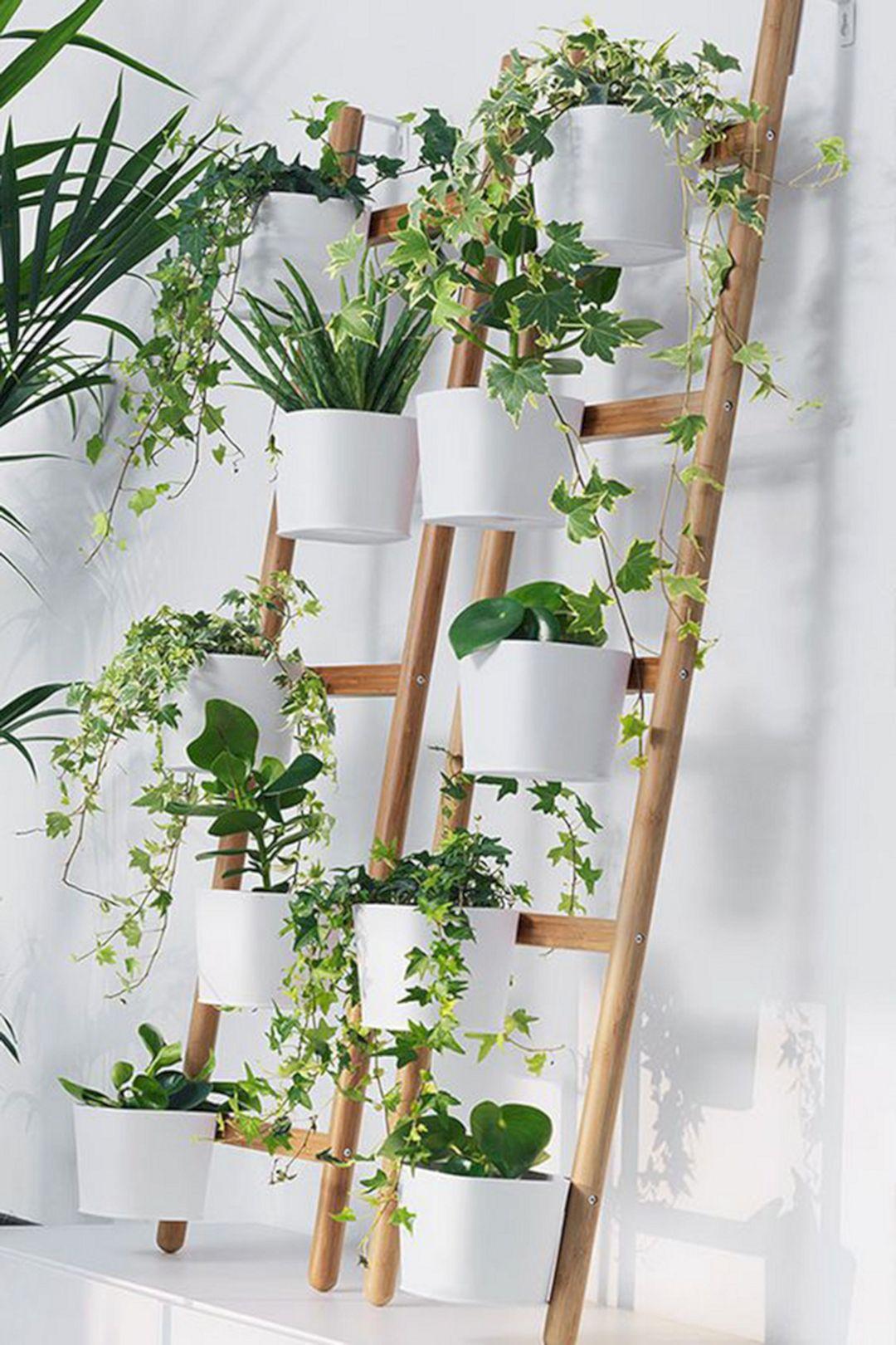 Indoor Plans Wall Ideas