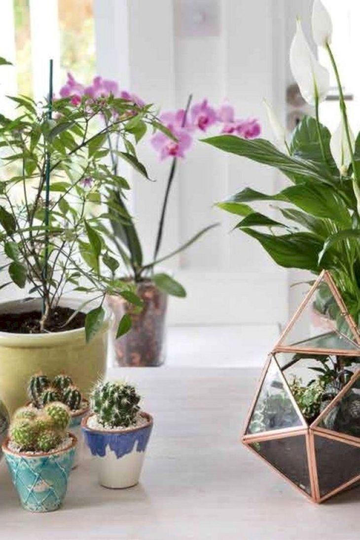 Beautiful Indoor Garden Ideas