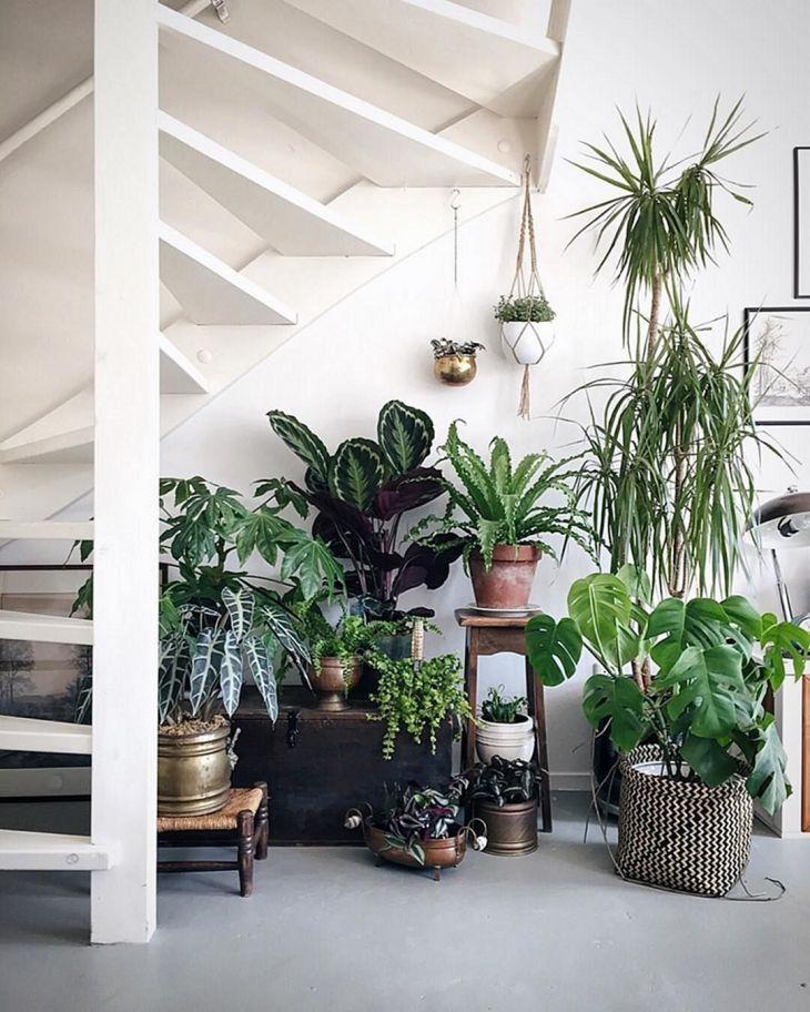 Beautiful Indoor Plants Design