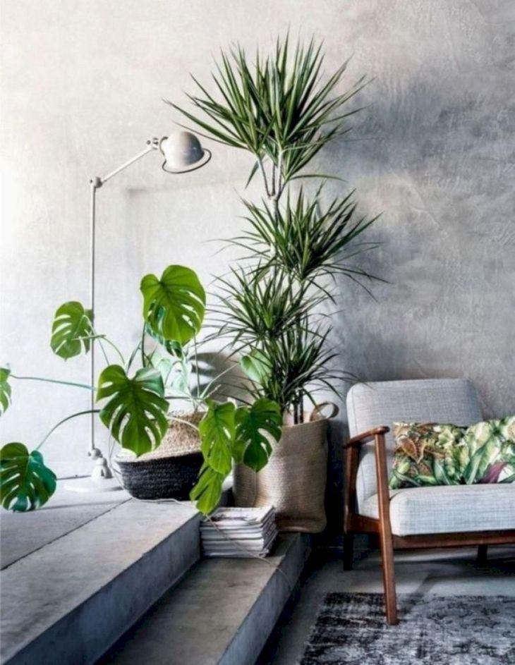 Indoor Plants Design ideas