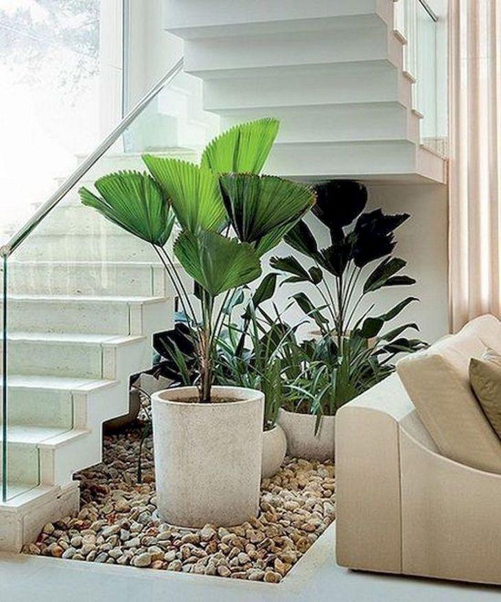 Indoor Plants Design