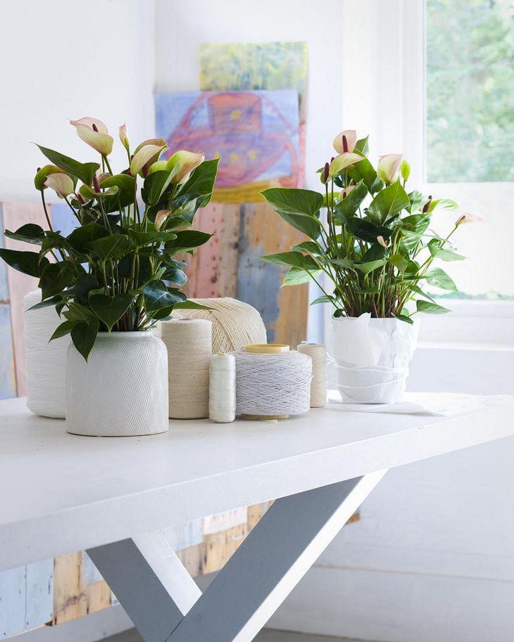 best Small Indoor Plants