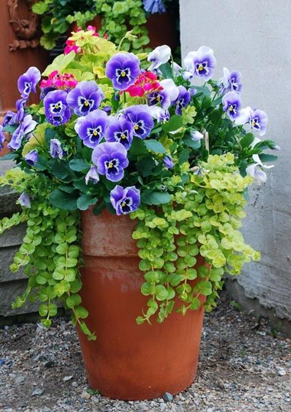 Spring Container Gardening Ideas 3